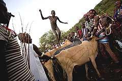 Hamer bull jump